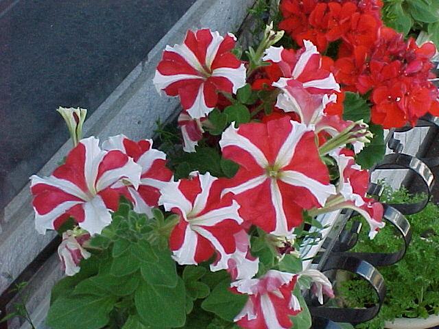 blommor som tål mycket sol